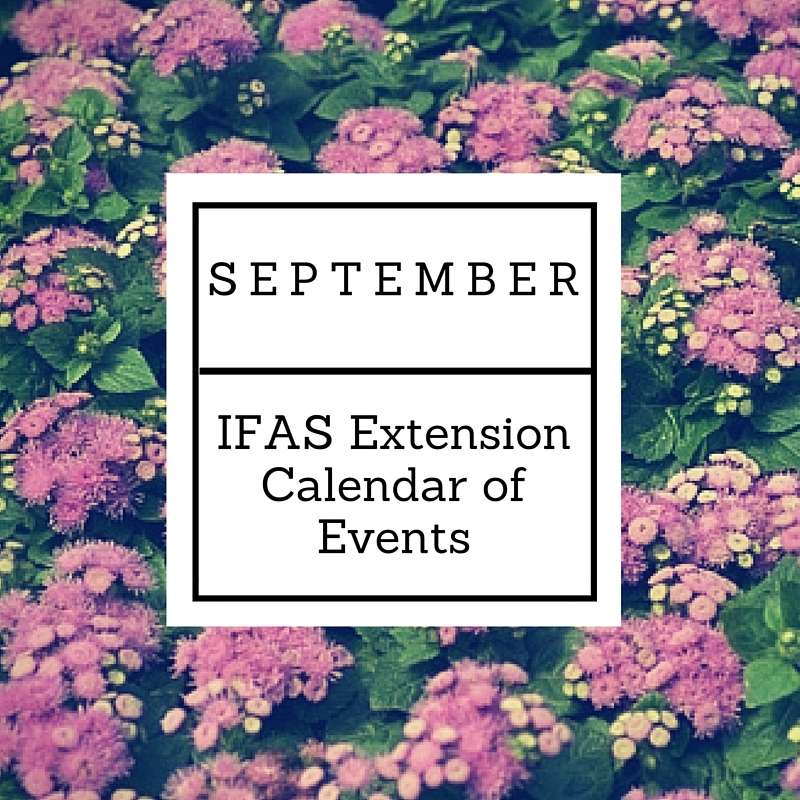 SEPTEMBER IFAS
