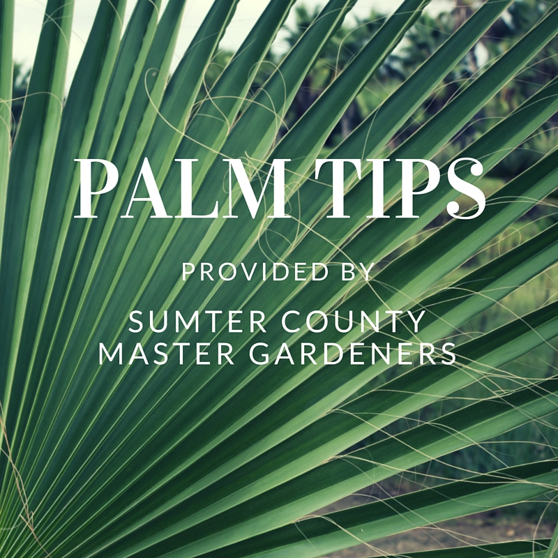 palm tips