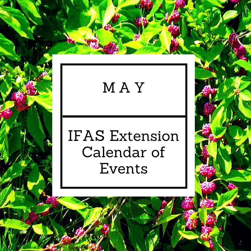 May 2016 IFAS