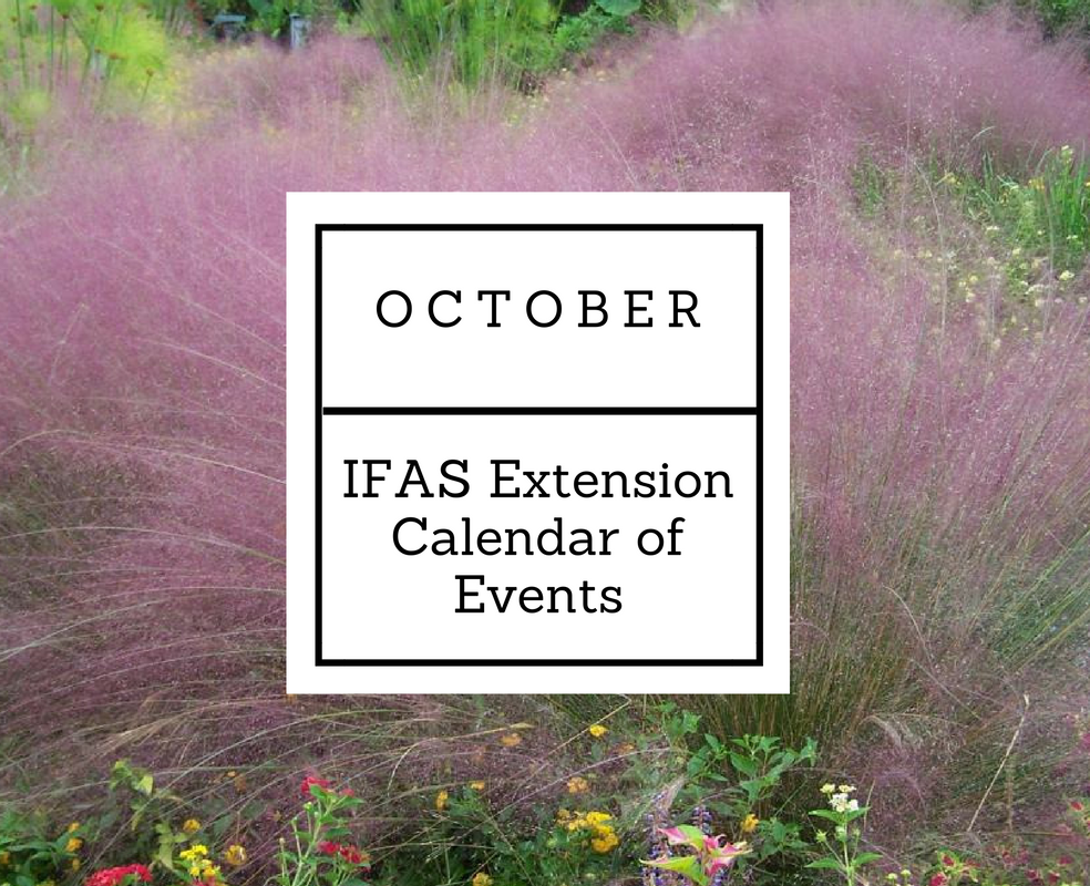october-2016-ifas