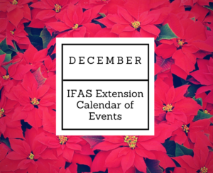 december-ifas