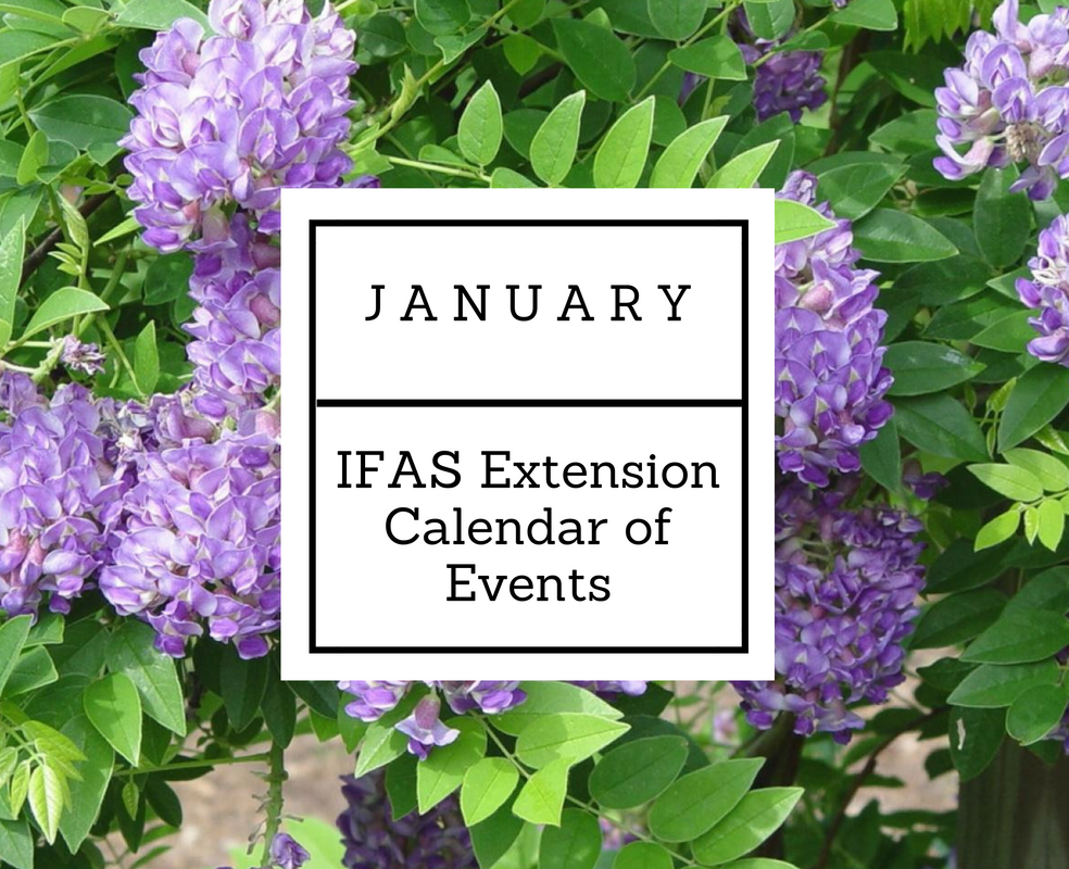 january-ifas-1